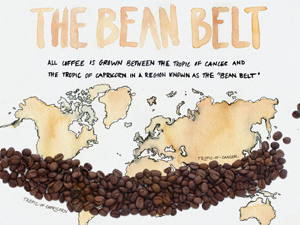 The Coffee Bean Belt.