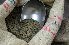 Green Raw Coffee Beans.