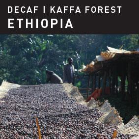 DECAF Kaffa Forest Ethiopia Coffee.