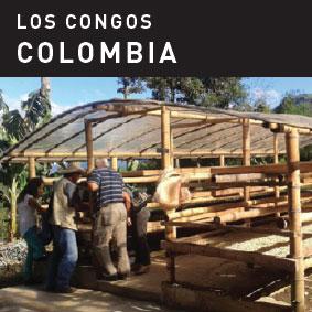 Los Congos Coffee Colombia
