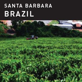 Santa Barbara Brazil Coffee