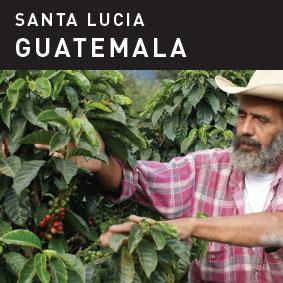 Santa Lucia Guatemala Coffee.