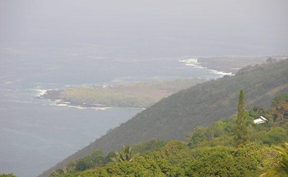 Kona Coffee - Kona Island.