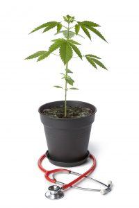Medical Marijuana. CBD Coffee