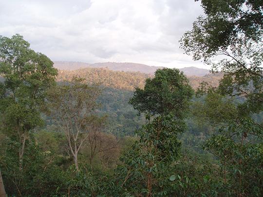Yirgacheffe Ethiopia.